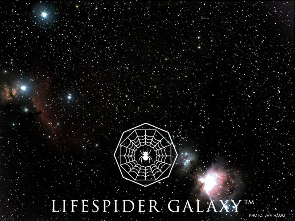 LifeSpiderGalaxy